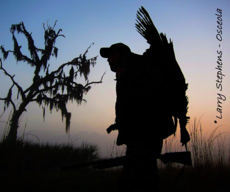 my-favorite-tree-osceola-gobbler-1