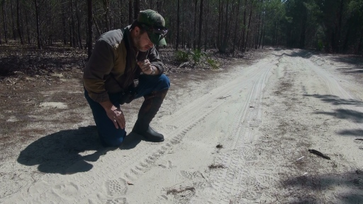 Inspecting Gobbler Tracks