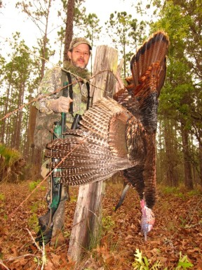 Awesome Osceola Gobbler