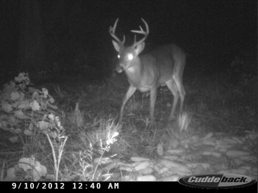 Florida Buck CDY_0046