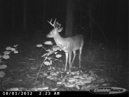 Great Florida Buck CDY_0509