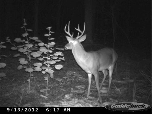 Great Looking Florida Buck CDYi0144