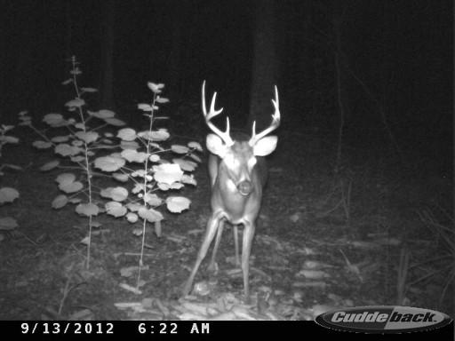 Florida Trail Cam Buck CDYi0148
