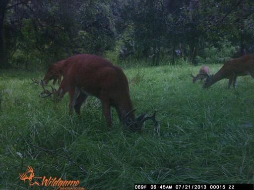 A Pile of Velvet Horned Bucks WGI_0015