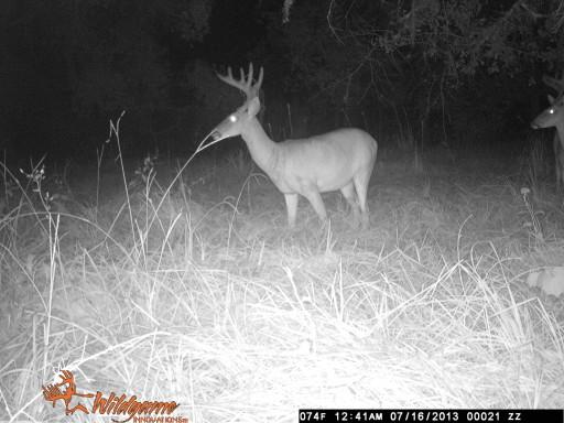 Monster Florida Buck