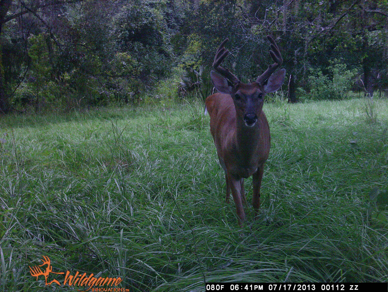 newsletter image title feeders feeder home buck deer boss