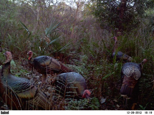 Fall gobblers 0230