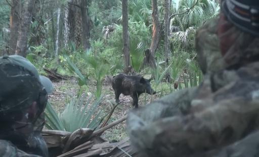 Close Encounters - BC Boar 10-2-13