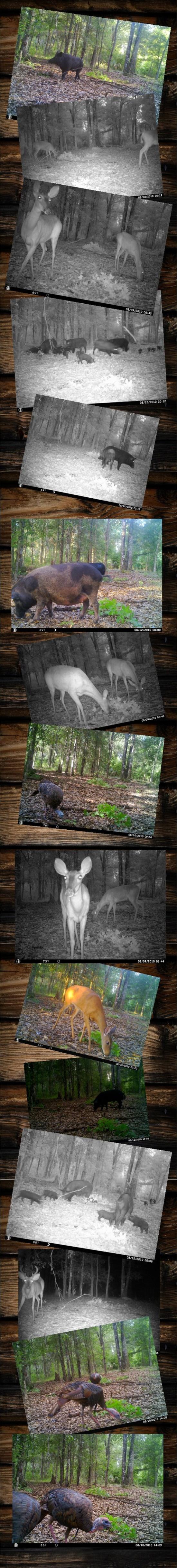 cam collage 8-14-13