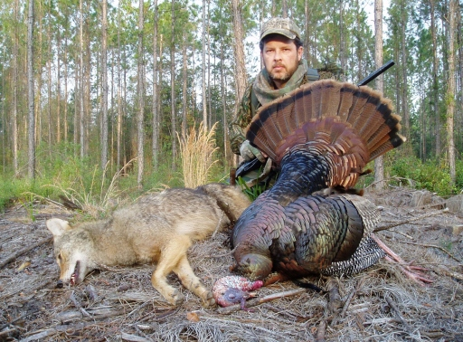 Cabbage Creek Coyote & Gobbler