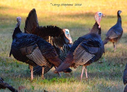 Osceola Flock 2-13-16 4c sm